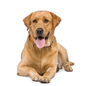 pet sitting services for all types of pet